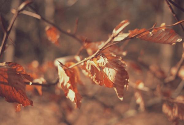 寂びの世界、枯れ葉