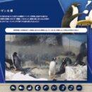 名古屋港水族館ライブ-ペンギン